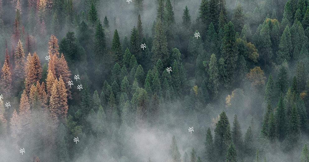 Exposição - Florestas para o futuro. Incêndios florestais: alterações climáticas e sustentabilidade